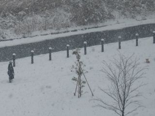 snow-white1.jpg