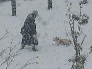 snow-white3.jpg
