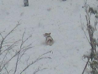 snow-white4.jpg