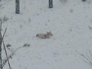 snow-white5.jpg