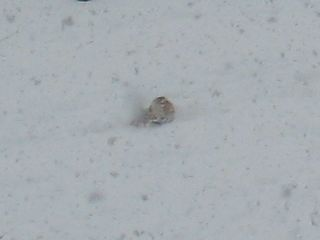 snow-white6.jpg