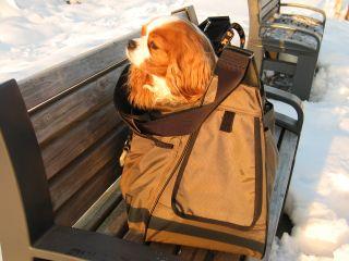 baggage7.jpg