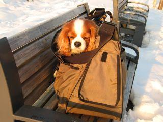 baggage8.jpg