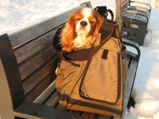 baggage10.jpg