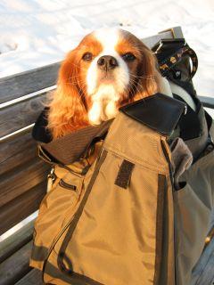 baggage11.jpg