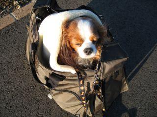 bagdog2.jpg