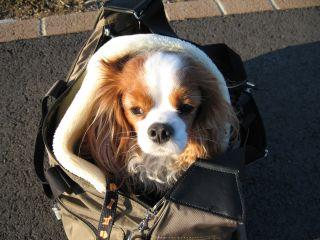 bagdog3.jpg
