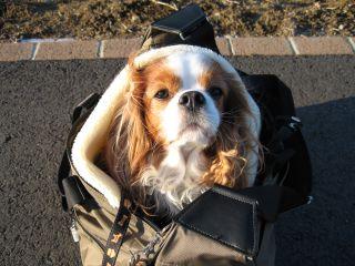 bagdog4.jpg