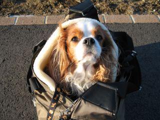 bagdog5.jpg