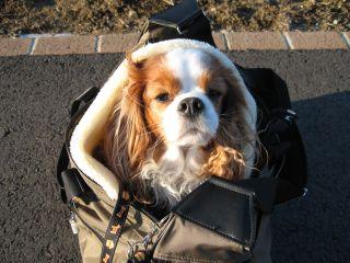 bagdog6.jpg