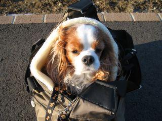 bagdog7.jpg