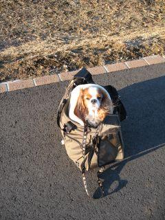 bagdog8.jpg