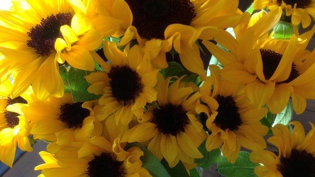 flowers42.jpg