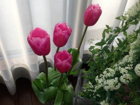 flowers47.jpg