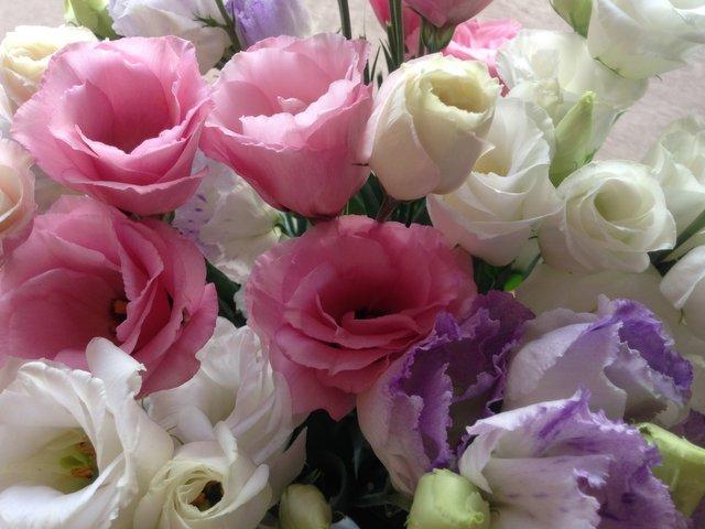 flowers59.jpg