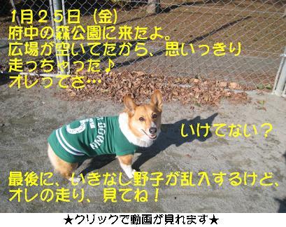 動画画像.JPG