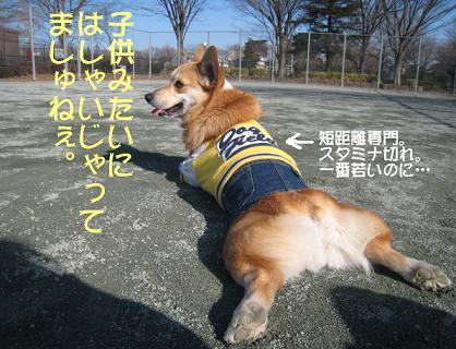 野子.JPG