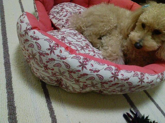 新しいベッド(ロム)