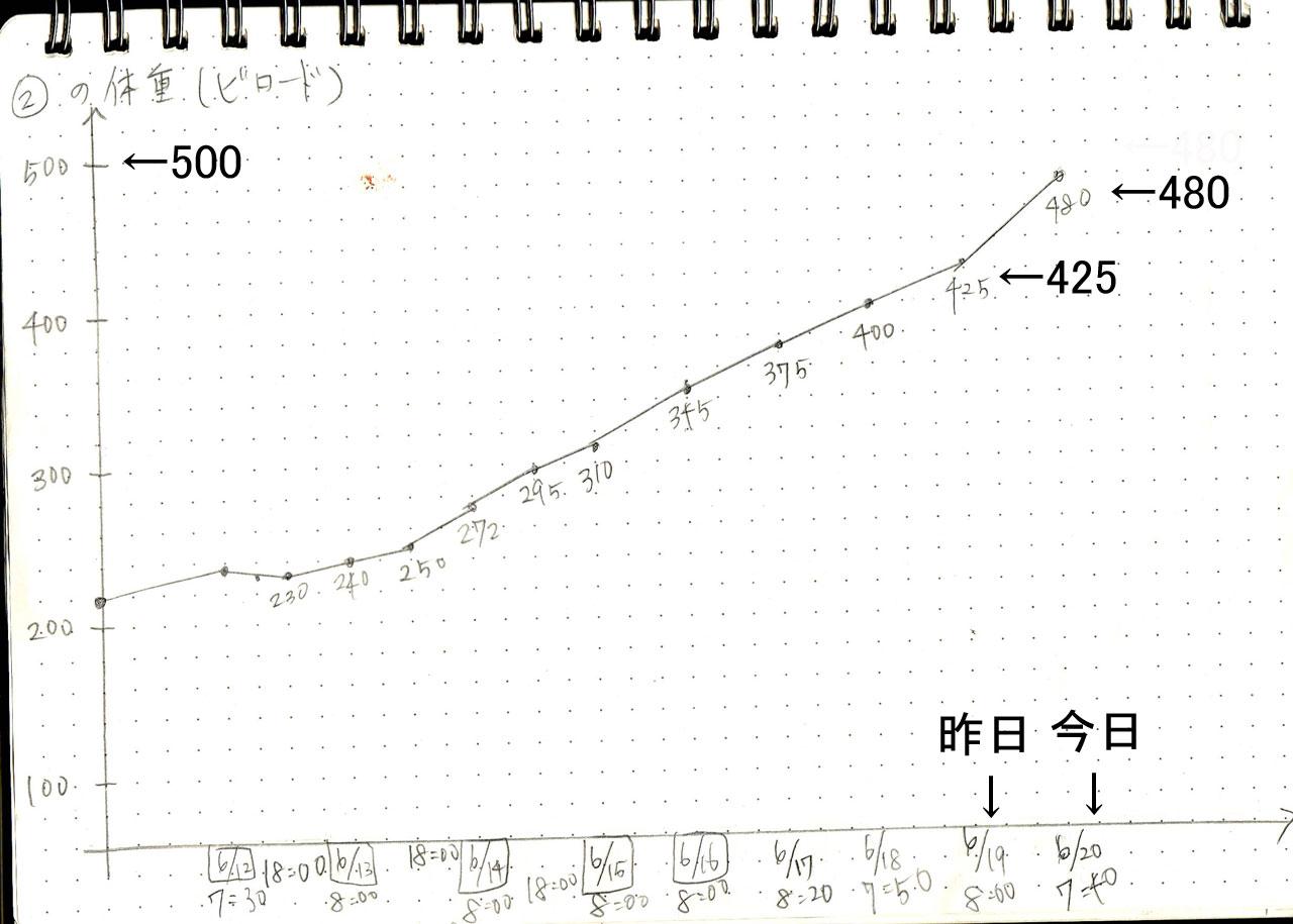 体重グラフ(ビロード)