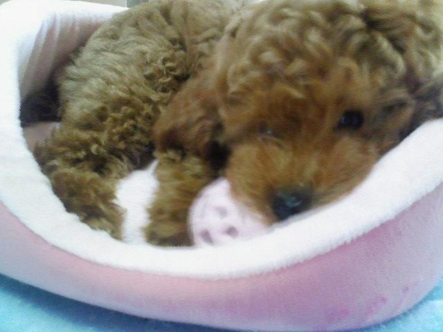 ベッドの上でピンクのボールで遊ぶあずき