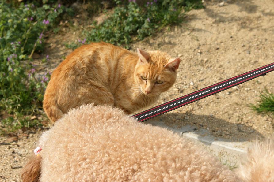 猫と仲良くするルル