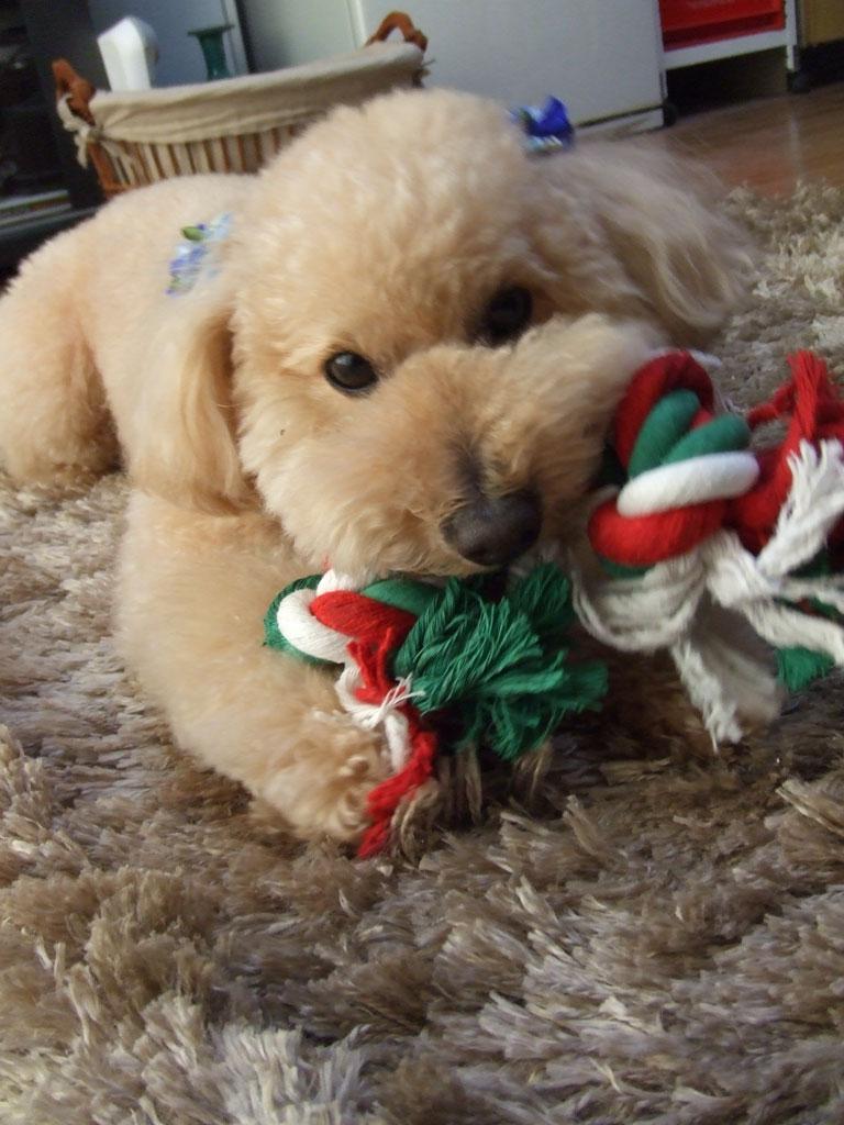 綱のおもちゃとロムさん