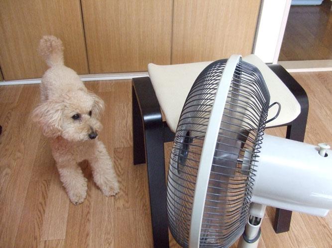 扇風機とロム