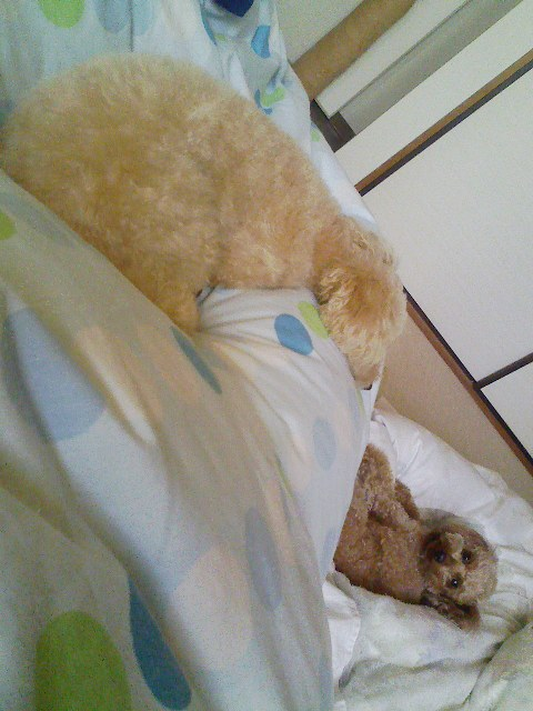 ねぼすけルルと寝ているロム