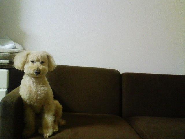 ソファーの上のロム