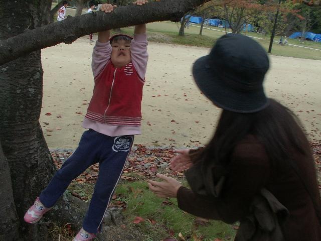 木にぶら下げられてる