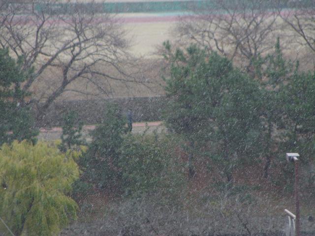 雪だよぉ〜