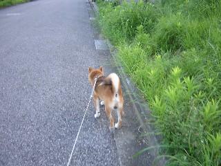 散歩にGO