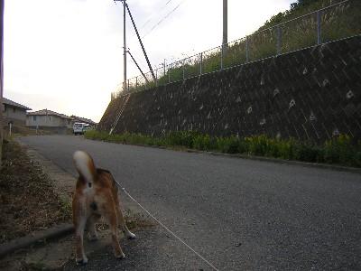 夕方の散歩1