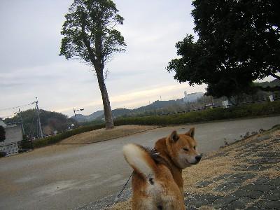 くすのき公園2