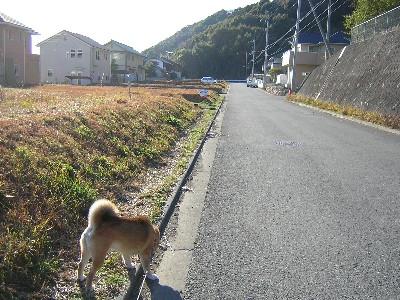 夕方の散歩2