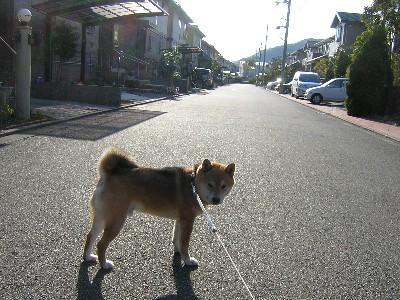 散歩いこう