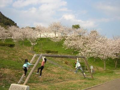さくら公園3