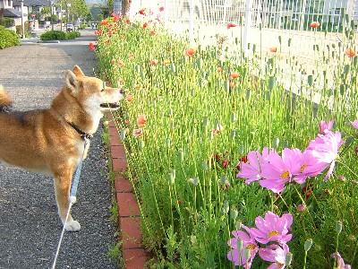 西公園の花