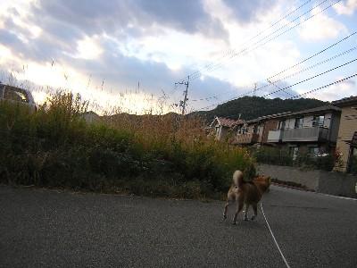 夕方の散歩�