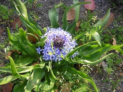 散歩中にみかけた花
