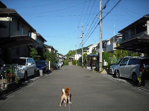 朝の散歩�