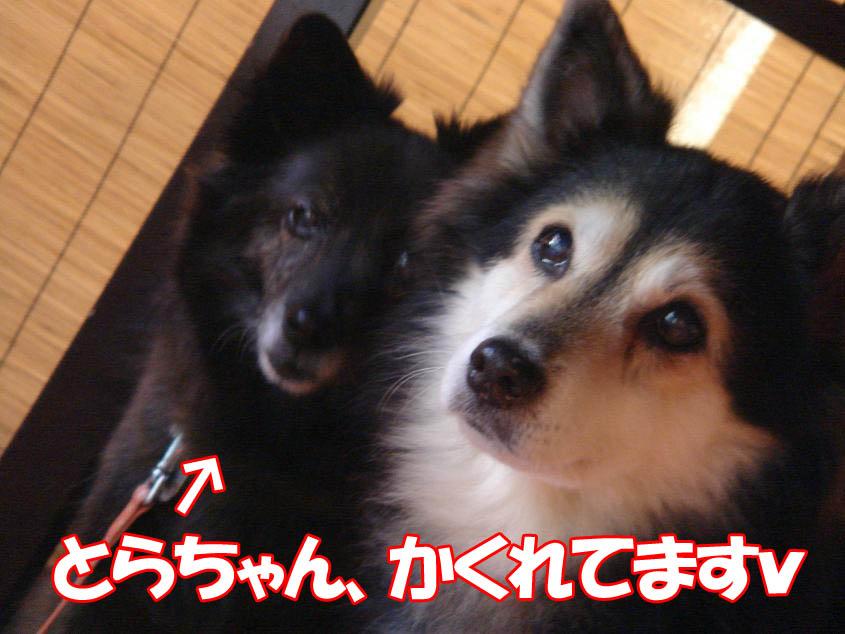 とらちゃん&くまちゃん