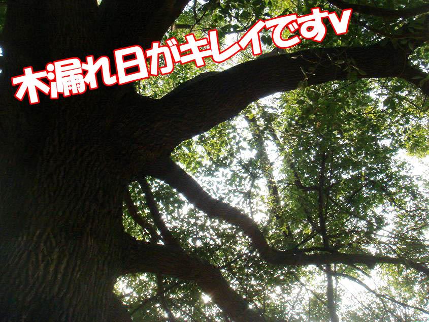 木漏れ日♪