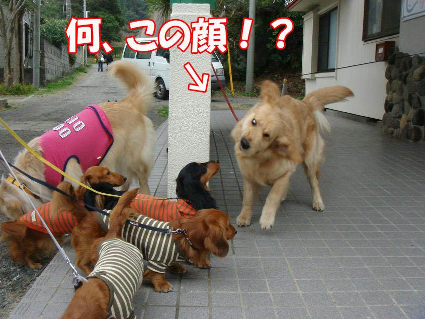 ヘンな顔〜!!
