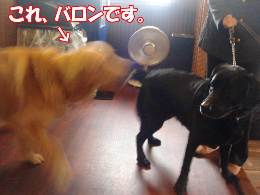 バロン&ノエルちゃん