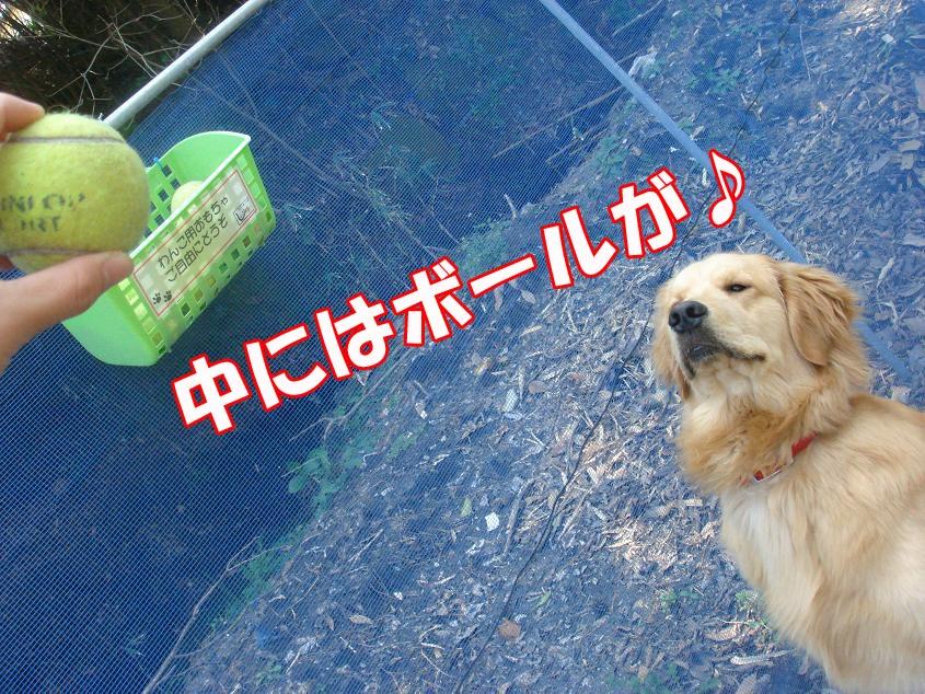 ボール〜♪