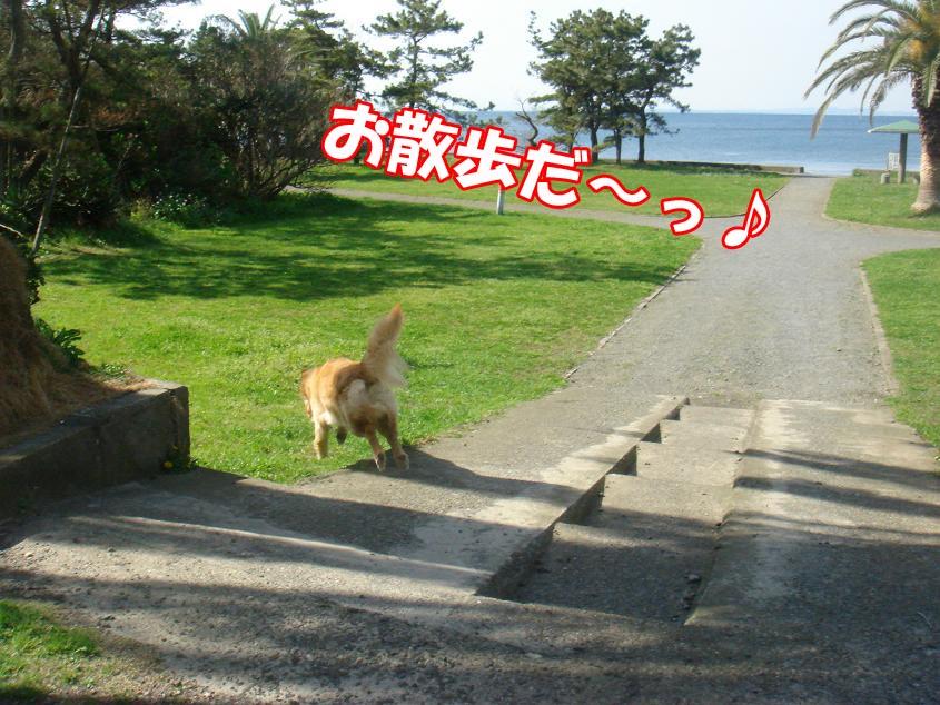 お散歩〜♪