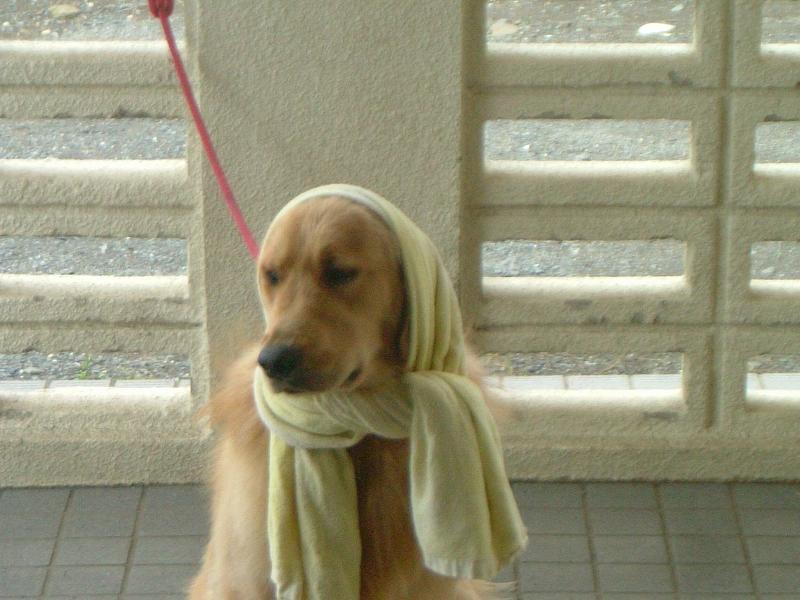 タオルがジャマです、乾かないです…。