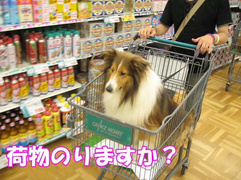 買い物メリー