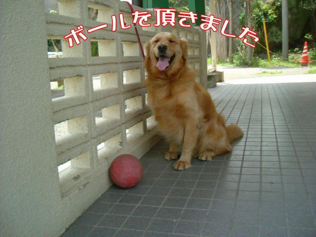 ボールを頂きました